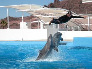 delfinario guaymas sonora