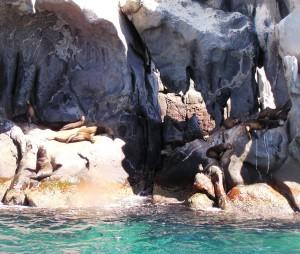 San Pedro Island sonora