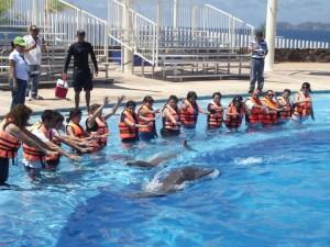 OCV dolphin experience