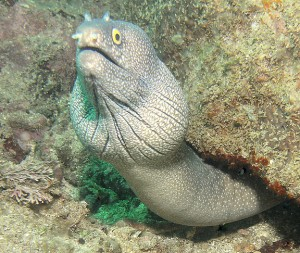 moray eel dive report