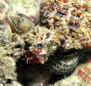 Nudibranchs san carlos sonora mexico dive report
